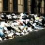 Ecomafie tra rifiuti e ambiente